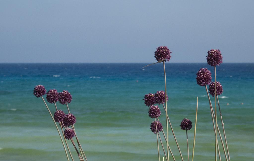 nel bel mare di cipro