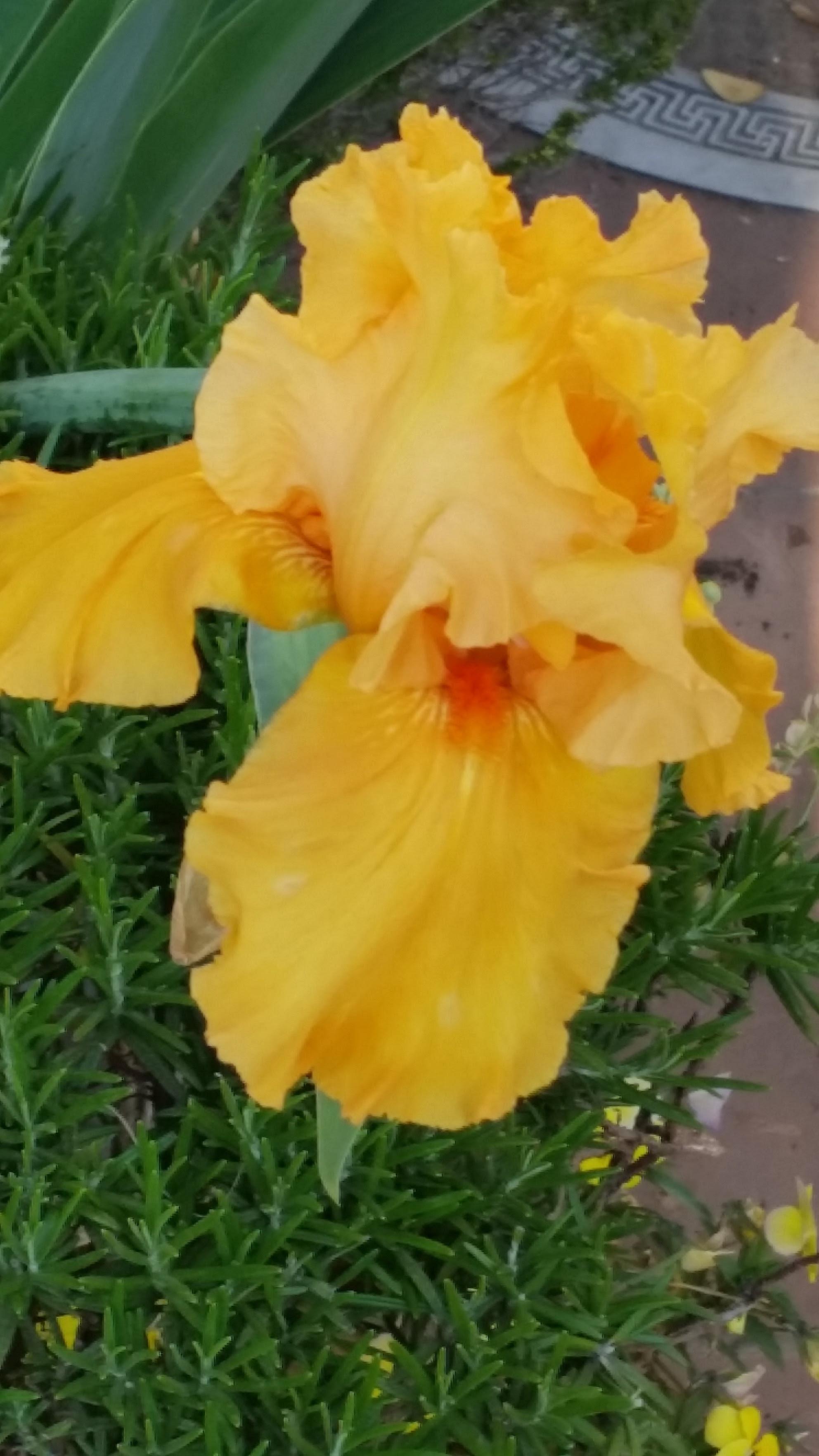 un fiore per fo