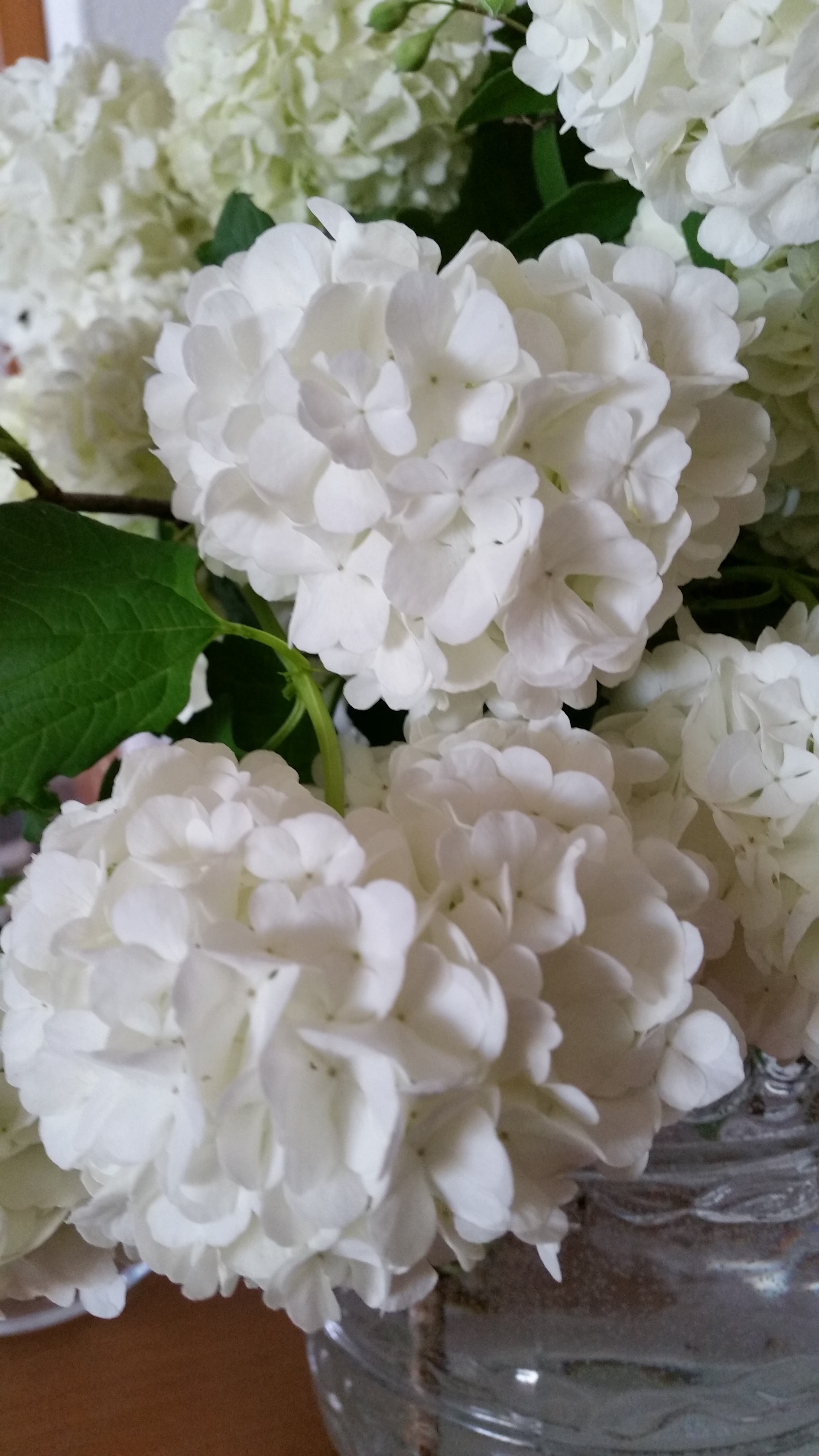 fiori bianchi per laura biagiotti