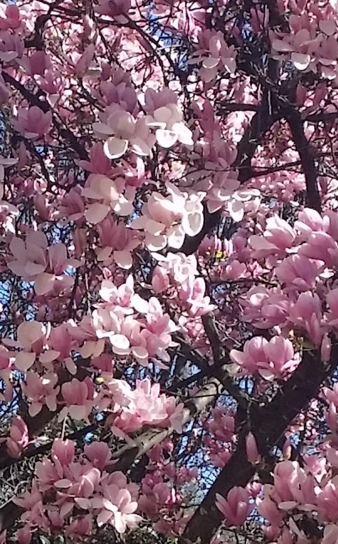 milano in fiore