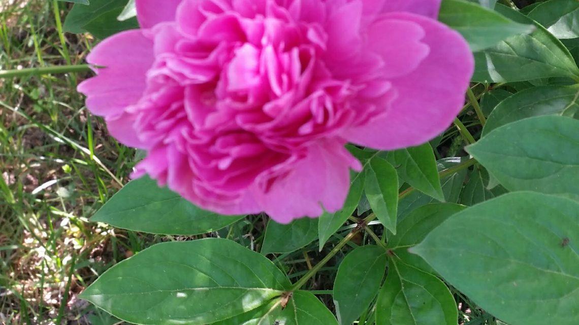 un fiore per ennio morricone