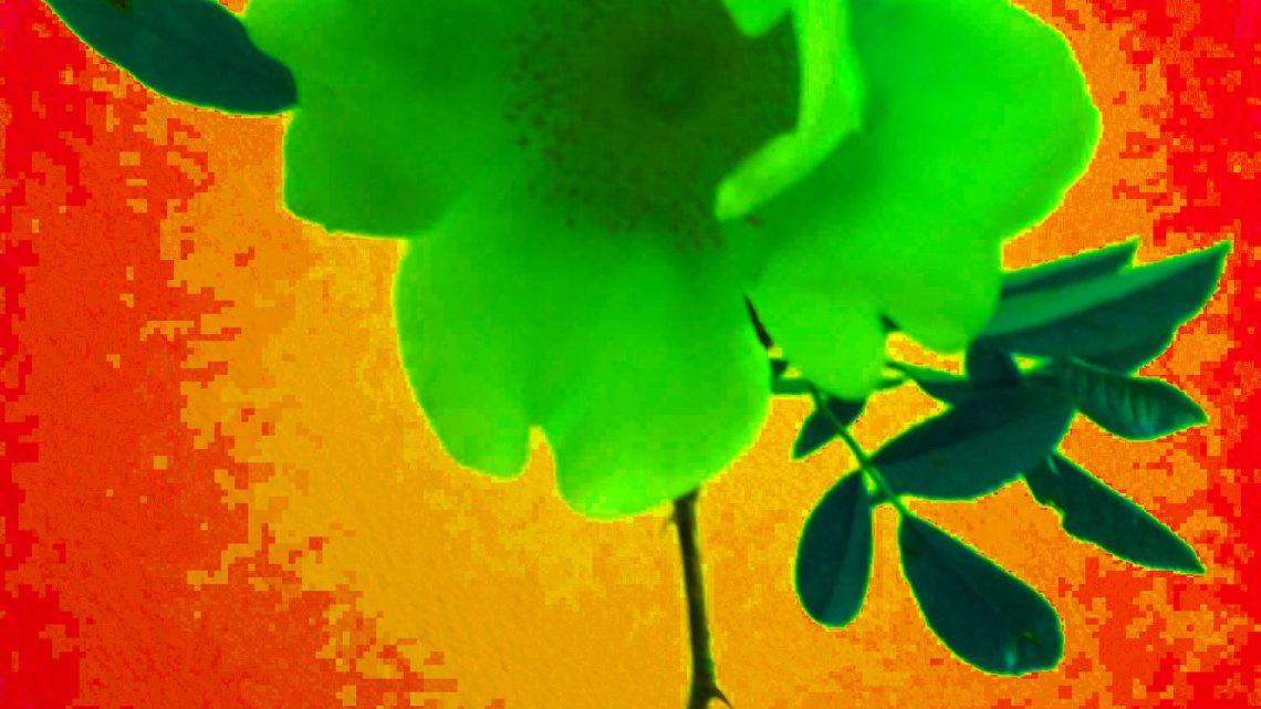un fiore per kenzo